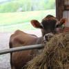 Molly Brook Farm Stay