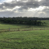 Cattle Camping near Noosa