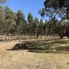 Carmyllie Forest & Farm
