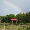 Austringer Haven Farm