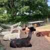 Paca Hill Farm - RV Hook up