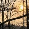 The Land - Quiet Woods