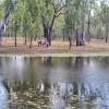 Rubern Lagoon Bush- Self Contained