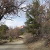 Pine Forest Overlook