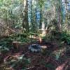 Hollyhock Farm Forest Retreat #2