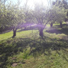 7 Acre Farm With Many Amenities
