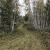 Forest Cleanse on 40 Acres