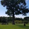 Piedmont Bison Ranch