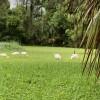 Grass Field- Tent camping ,