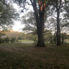 Enchanted Oak Paradise