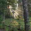 Forest Campsites
