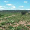 Dinosaur Tracks Ranch