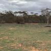 Beautiful mallee field