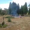 Dandry camp pilliga forest