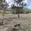 Kangaroo Corner Paddock