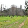Reedy Creek Camp