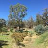 Gooseberry Hill