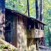 Historic Camping Cabin 8