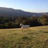 Jamberoo Mountain Farm Camp
