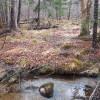 Hidden Brook Wilderness Camping
