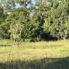 Witta Grasslands