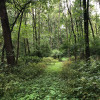 Primitive wooded campsite