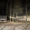 Pine woods, home for tents and camp
