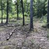 Smith Woods Campsite #68