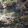 Dairy Camp - Cricket Creek