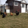 Gardens And Off-Grid Mini Farm