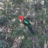 Dharawal Camp