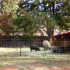 Mini-Petting Farm - Tent Site