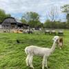Fantastic Farm Experience Camping