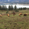 Columbia River Ranch