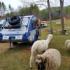 Farm Animal Rescue - RV Site