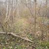 Carolinian Forest Twin Creeks