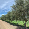 Olive View Camping - Scenic Rim