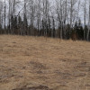 Boreal Woods and Pasture