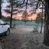 Southwest Sage and Pinon Pine