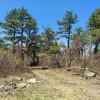 North Mountain Tuscarora Trail Camp