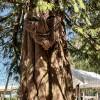 KIN Forest School Campsite
