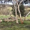 Driftwood Farm Toodyay