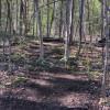 Hacksaw Ridge Forest camping
