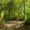Salmon Run Trailside #4
