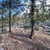 River Mountain Forest, Estes Park
