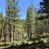 Pine, oak, acorn, elderberry trees