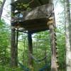 Martin's Nest #2 -Nantahala Gorge