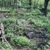 Ferndell Springs