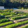 HillBilly Farm Co Permaculture Farm