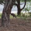 Kangaroo View Camp